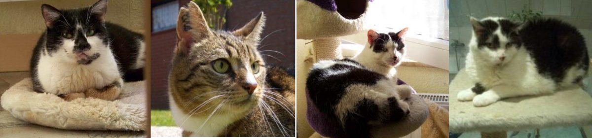 Katzenhilfe Greven e.V.